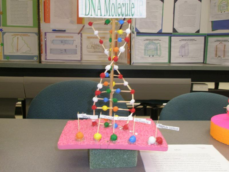 Dna structure model project giftsforsubs dna model scien ccuart Gallery